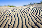 Bird tracks on a dune. Curonian Spit, Lithuania.