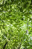 Foliage in forest, Vallon de l'Aiguebrun, Sivergues, PNR Luberon, Vaucluse, France