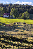 Hay harvesting in the Jura, Bellecombe region, in the south of the Jura massif, France
