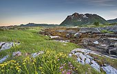 Rocky coast with grass and seaweed, behind Lofoten mountains, Valberg, Lofoten, Nordland, Norway, Europe