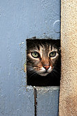 Cat behind a catflap