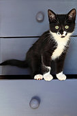 Black and white kitten in a drawer