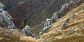 Frankenthal Nature Reserve, granite rocks of the Martinswand, Honeck Massif in autumn, Ballons des Vosges Regional Nature Park, France