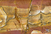 Banded formations on a wall of a former iron mine gallery in sandstone, Vosges du Nord Regional Nature Park, France