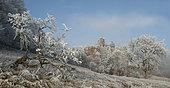 Frosted Windstein sandstone rocks, Vosges du Nord Regional Nature Park, France