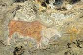 San or Bushman rock art on a sandstone cave wall near Clarence. Free State. South Africa.