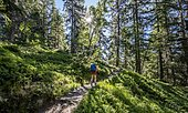 Hiker on trail through forest, Chamonix, Haute-Savoie, France, Europe