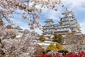 Blossoming cherry trees, Japanese cherry blossom, Himeji Castle, Himeji-jō, Shirasagijō or White Heron Castle, Prefecture Hyōgo, Japan