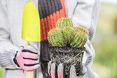 Femme tenant un cactus (Echinocereus spachianus, Echinopsis spachiana) pour plantation, au printemps.