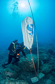 Scuba diver using a lifting parachute for the removal of a dead body, in the Natural Marine Reserve of Cerbère-Banyuls, Pyrénées-Orientales, Occitania, France