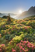 Sunrise Chalberboden, Bern, Switzerland, Europe