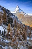 Matterhorn and larch, Valais, Switzerland, Europe