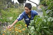 Adolescent travaillant dans un jardin potager, projet social à Bogota
