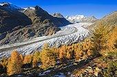 Great Aletsch Glacier and Wannenhorns, Valais, Switzerland, Europe