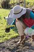 Woman planting horseradish.