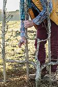 Man pruning a pear tree in winter.