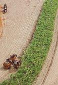 Mechanized Harvest of Sugarcane with Interior Atlantic Forest, Santa Rita do Passa quatro, Sao Paulo, Brazil, South America