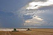 Soybean Mechanized Harvest near Luis Eduardo Mahalhaes, Bahia, Brazil, South America