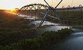 Irrigation of coffee plants at dawn near Luis Eduardo Magalhaes, Bahia, Brazil, South America