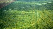 Irrigated plantations in the western part of the state of Bahia, Brazil, South America