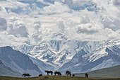 Horses grazing in front of Tien Shan snow-capped mountains, Sary Jaz valley, Issyk Kul region, Kyrgyzstan, Asia