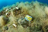 Boîte de thon vide sur le fond, zone marine protégée Punta Campanella, réserve marine ; Massa Lubrense, Penisola Sorrentina, Costa Amalfitana, Mer Tyrrhénienne, Italie, Mer Méditerranée