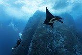 Scuba diver, underwater photographer taking pictures of Giant Oceanic Manta Ray (Manta birostris), underwater cliffs, Roca Partida, Revillagigedo Islands, Mexico, America, Eastern Pacific, Central America