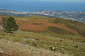 Hiking to La Rhune, View on the bay of Saint-Jean-De-Luz, Basque Country, France