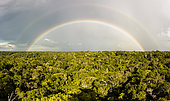 Stormy skies and rainbows over the lowland rainforest of the Ducke Forest Reserve, Manaus, Brazil.