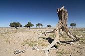 Galba Gobi Desert Landscape, Khanbogd, Mongolia