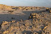 Landscape of the Khaluf desert (Sugar dunes), Oman