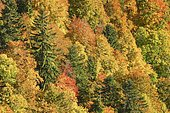 Mixed forest in autumn, Switzerland, Europe