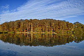 Pond and forest reflection in autumn, Territory of Belfort, France