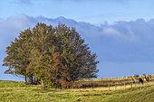 Horses in summer in the Jura, Massif du Grand Colombier, Southern Jura, France