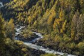 Vallon de Laverq in autumn, Ubaye, Alpes de Haute Provence, France