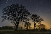 Starry sky over trees, night, star, Oldenburger Münsterland, Goldenstedt, Lower Saxony, Germany, Europe