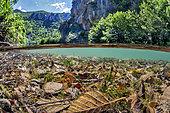 Litter of dead leaves at the bottom of the Dourbie river, downstream of the commune of Nant, Aveyron, Occitania, France