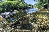 Vue mi-air mi-eau du fleuve Hérault, en aval de la commune de Valleraugue, Gard, Occitanie, France