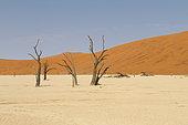 Dead trees, Sossuvlei, Deadvlei, Namib
