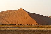 Sossuvlei, Deadvlei, Namib