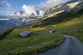 Evening mood, path leads to mountain huts, alpine pasture, Pfingstegg, behind the summit of the Wetterhorn, Jungfrau region, Grindelwald, Bern, Switzerland, Europe