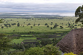 Shrubby savannah in the rainy season, Queen Elizabeth National Park, Uganda