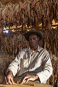 Handcrafted cigar making, Cuba