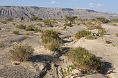Desert Steppe and Jebel, Sultanate of Oman