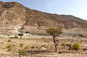 Desert landscape, Sultanate of Oman