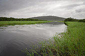 Kaw Marshes Nature Reserve, French Guiana
