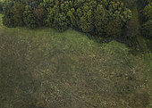 Coulemelle (Macrolepiota procera), vue aérienne de cercles de fées, le plus grand cercle mesure 25 m de diamètre, West Sussex, Angleterre