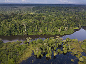 Aerial view of Congo rainforest along Rembo Ngowe river, Akaka, Loango National Park, Gabon.
