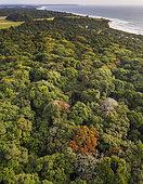 Rainforest along Atlantic coast, near Omboue, Gabon, central Africa.