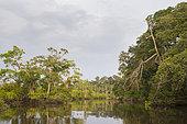 Tropical rainforest along Rembo Ngowe river, Akaka, Loango National Park, Gabon.